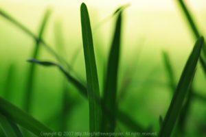 green-graves