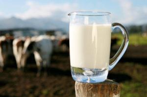 milk-cows