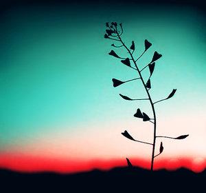 lover_flower_by_julkusiowa1