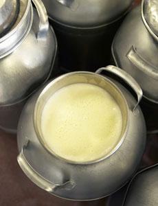 raw-milk-jug-md
