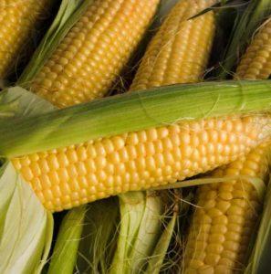 Corn92