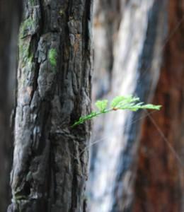 tree_web2