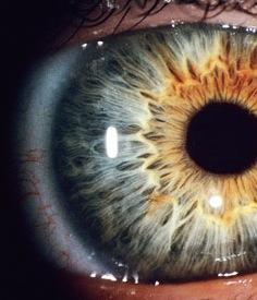 Human-eye-008