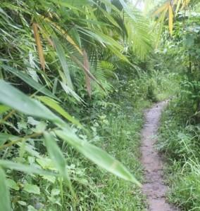 Jungle-Trail-21